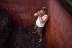 wine012