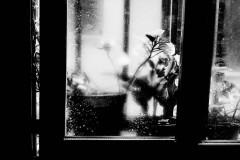 Serie-Pulsion_foto_Miguel-A_-Munoz-Romero_011