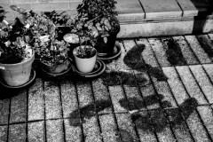 Serie-Pulsion_foto_Miguel-A_-Munoz-Romero_014