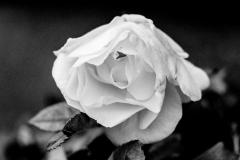 Serie-Pulsion_foto_Miguel-A_-Munoz-Romero_020